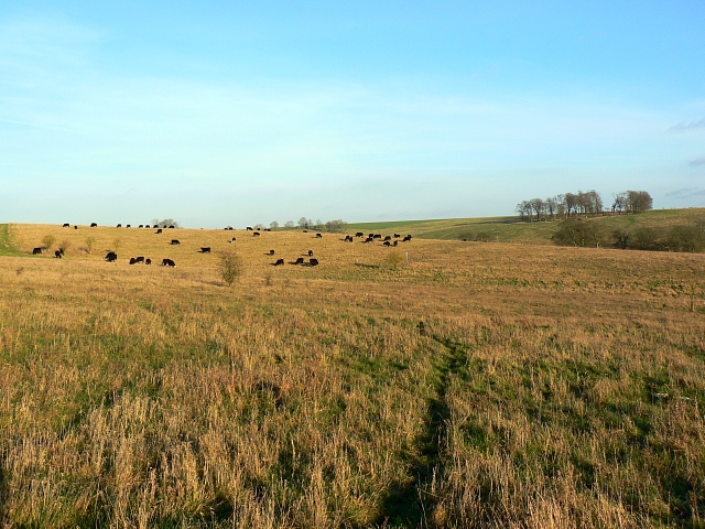 Part of the Salisbury Plain military training area