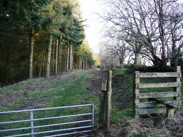 Henallt Wood