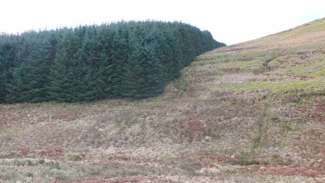 Kirkton Wood