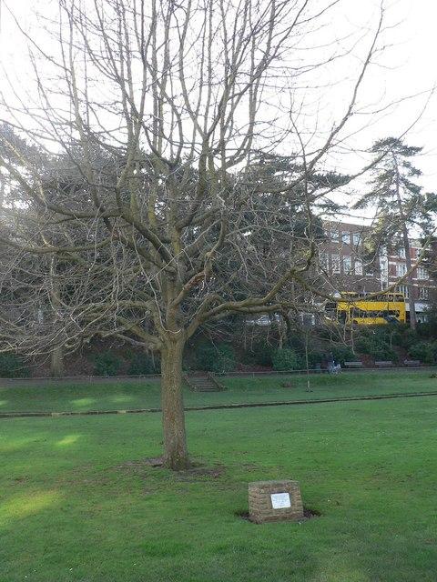 Bournemouth Gardens: Queen Elizabeth II jubilee tree