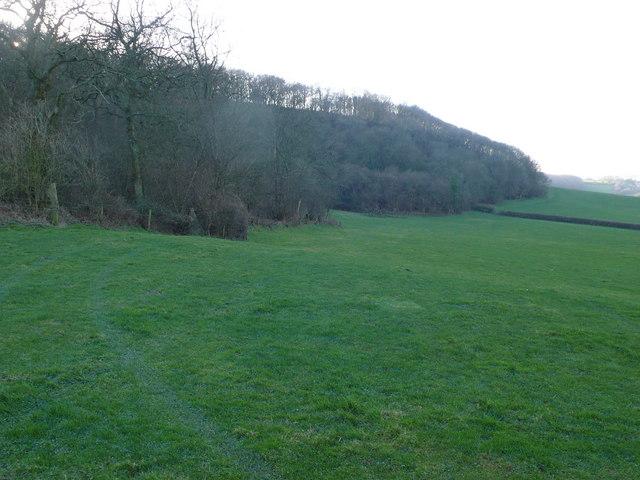 Hill Wood near Buckland Newton