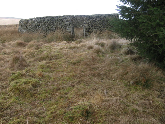 Sheepfold at corner of forest on Brown Hill