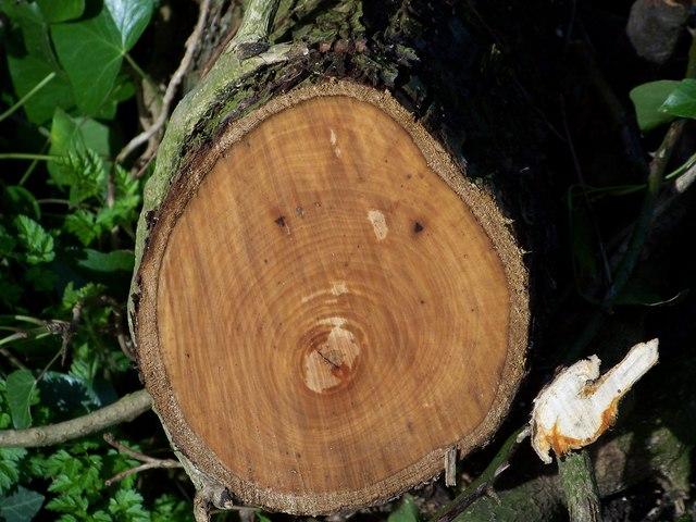 Log end, Bishopstone