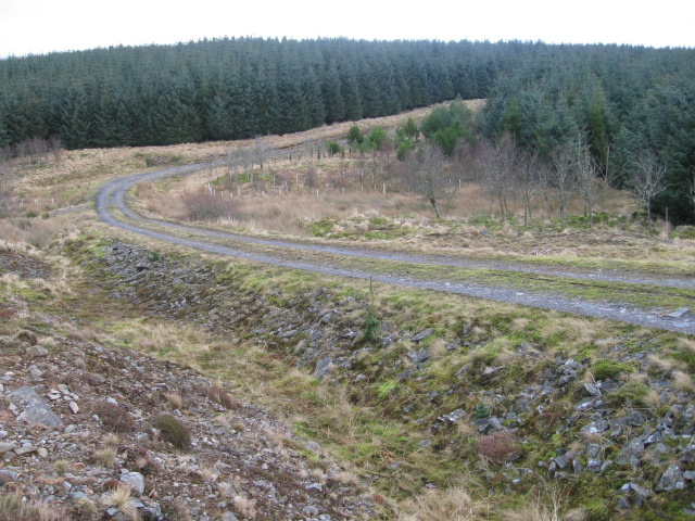 Forest track to Crookedstane Rig