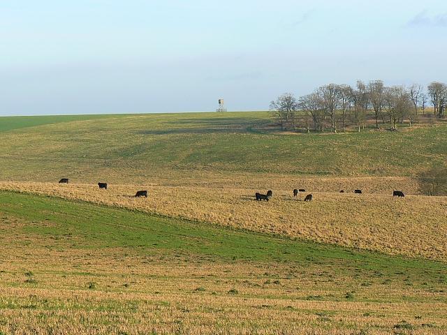 Looking slightly south of east in Salisbury Plain