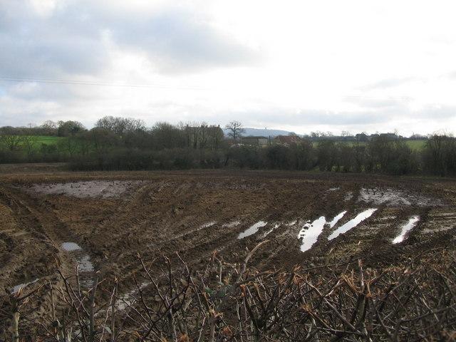 Farmland near Witham Friary