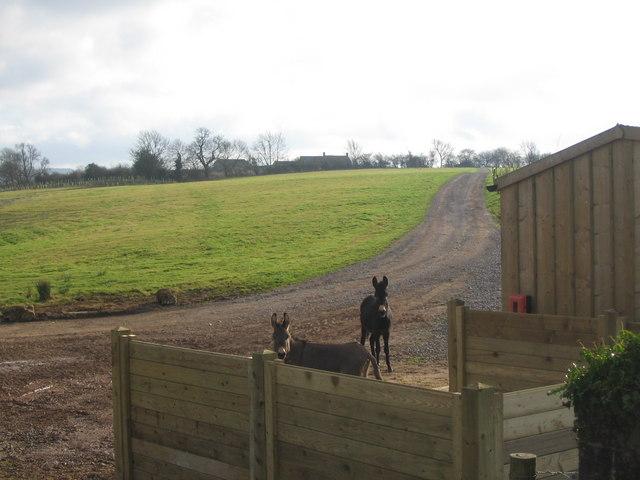 Track at Little West Barn Farm.