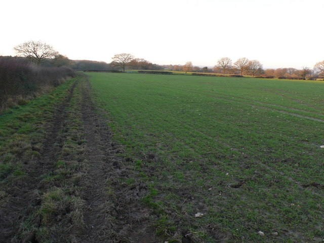 Hedge,footpath and field, Melcombe Park Dorset