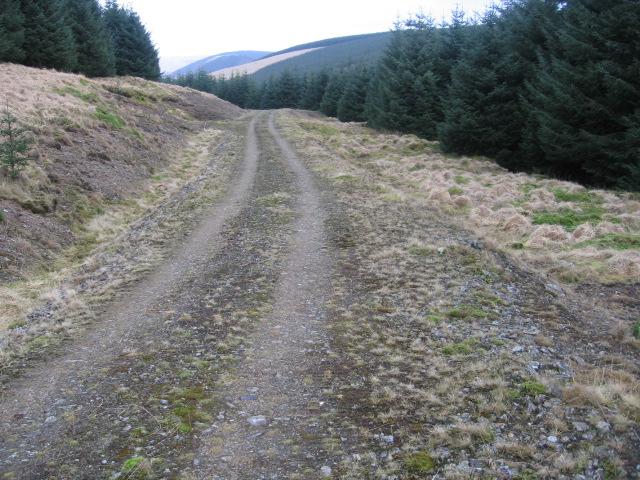 Forest track at Crookedstane Rig
