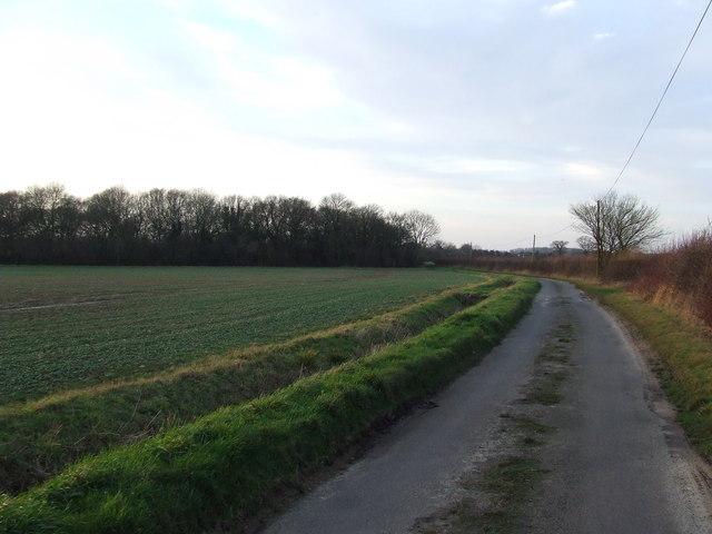 Kingrow Wood