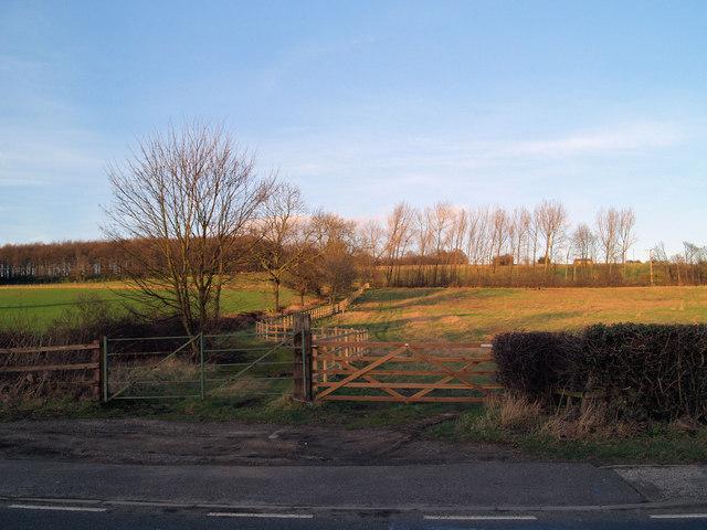 Field gates off Cortforth Lane