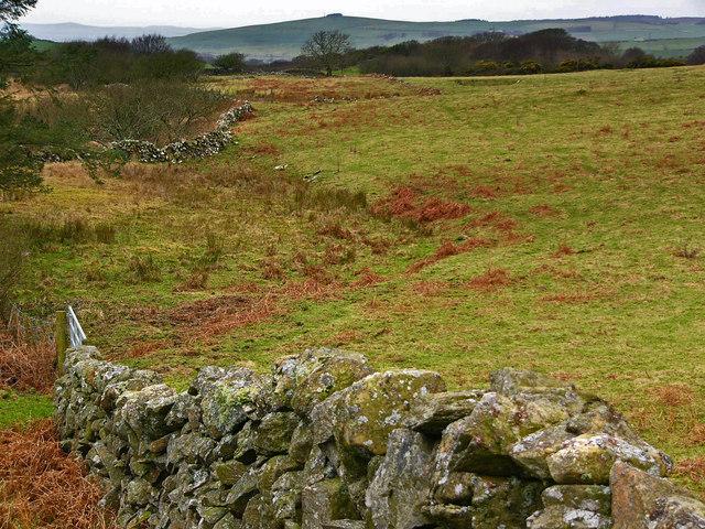 Fields near the Wood of Dervaird