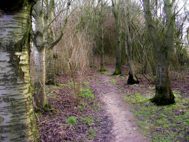 Public footpath through wood