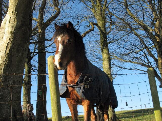 A friendly steed at Gwnhinger Farm