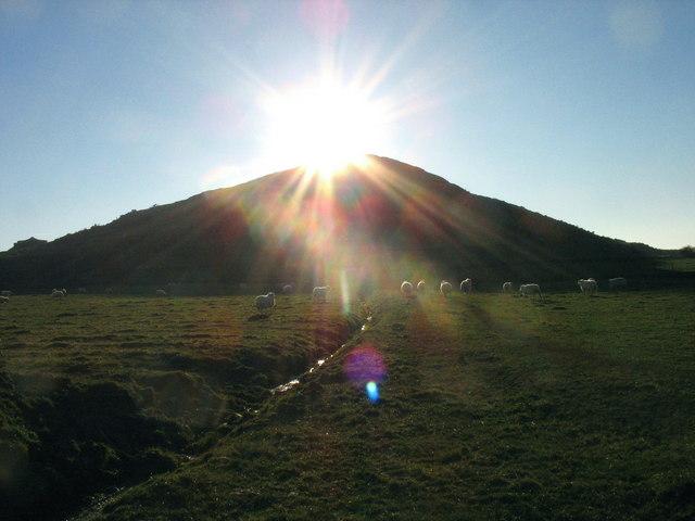 Sun worshipping sheep below Moelypenmaen
