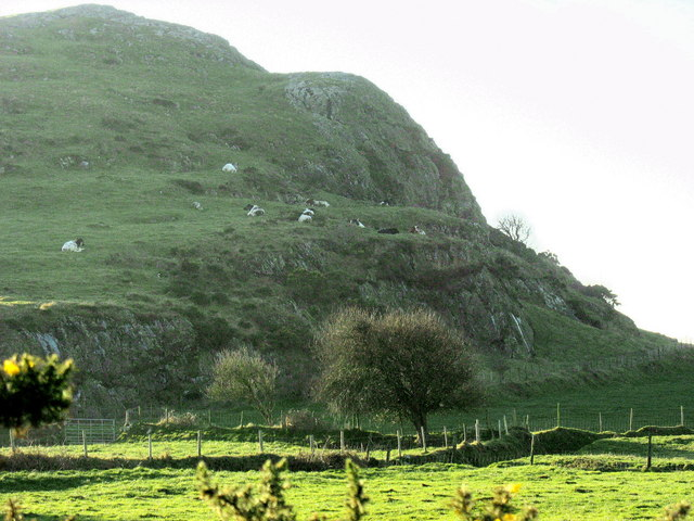 Cattle on the steep slopes of Moelypenmaen