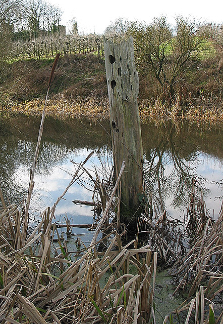 Decaying tree stump in the canal