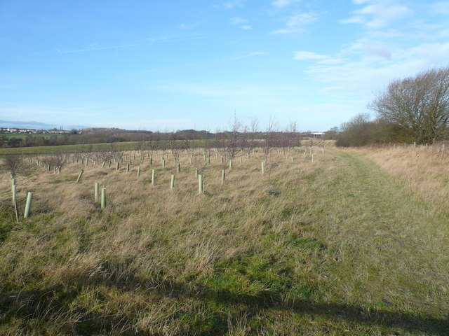 Footpath to Doe Hill - View of newly planted Woodland