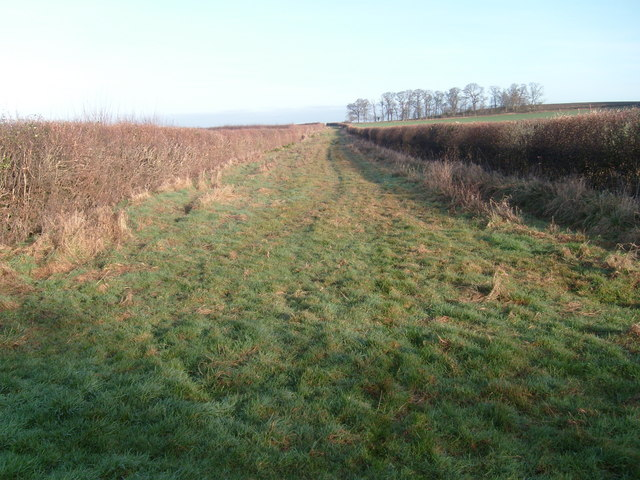 Thornhill Lane (Track)