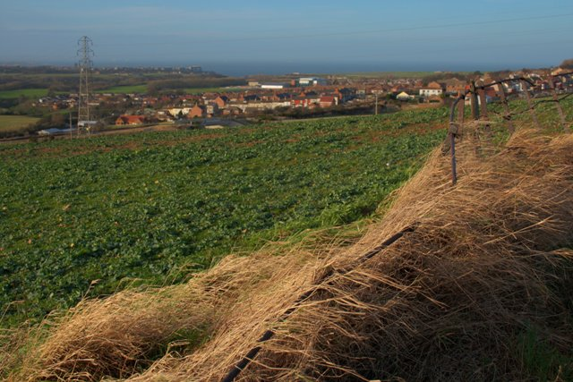 Iron Fence and Arable Field