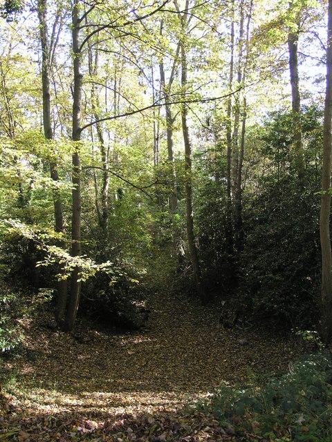 Gravel Hill Spring