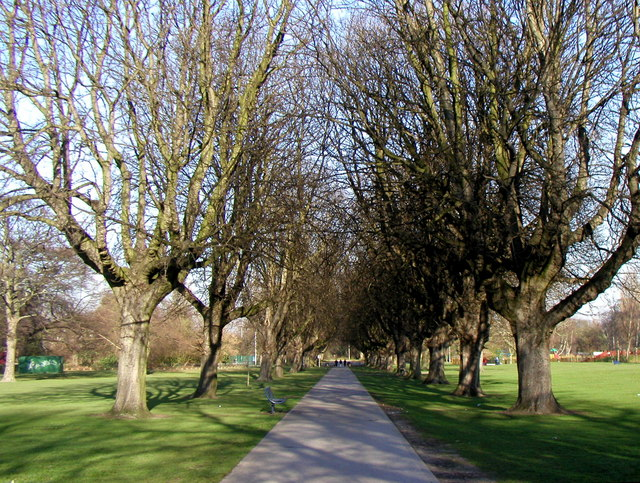 Avenue of Trees in West Park