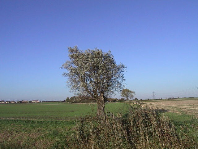 Willow Tree on the Fen Edge