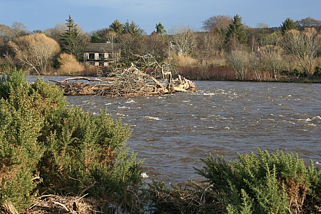 River Spey with Uprooted Tree