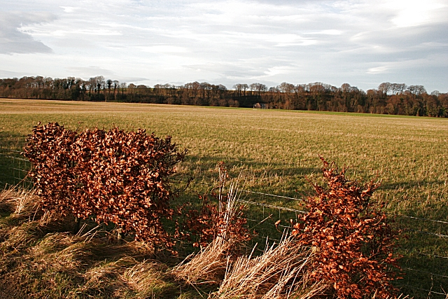 Hedgerow at Dipple