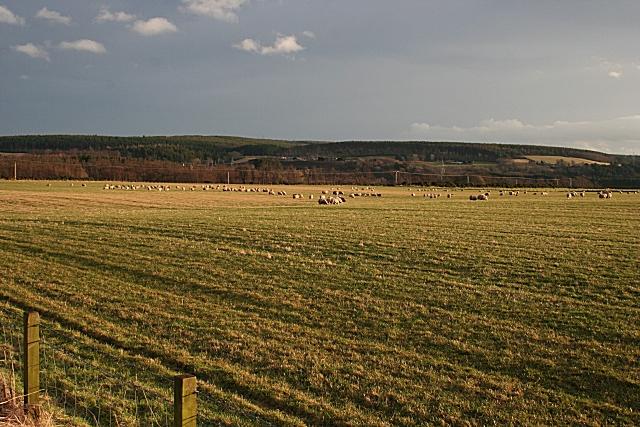 Pasture at Dipple
