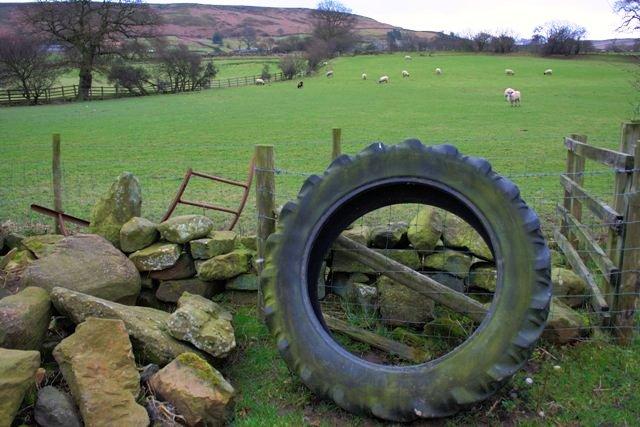 Pasture, Near High Cowhelm Farm