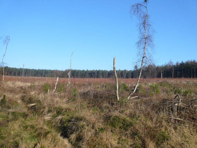 Bottom Moor Forestry Plantation