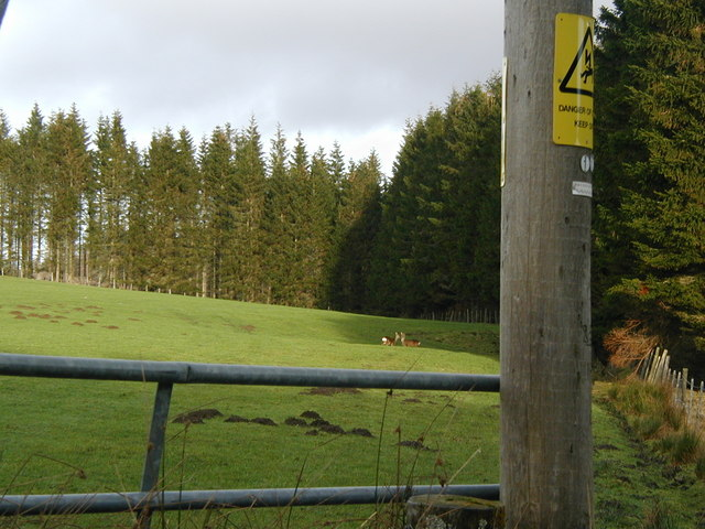 Roe deer in the field in front of Rhinstock