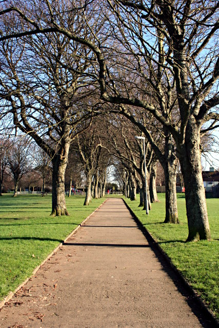 Tree-lined path in Devonport Park