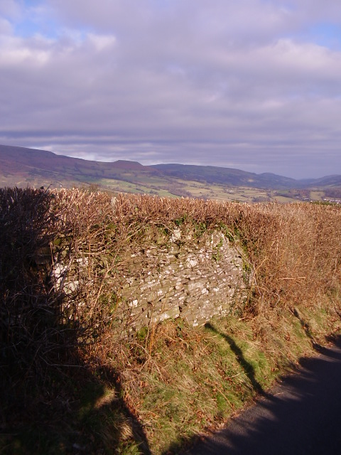 Old wall and hedge