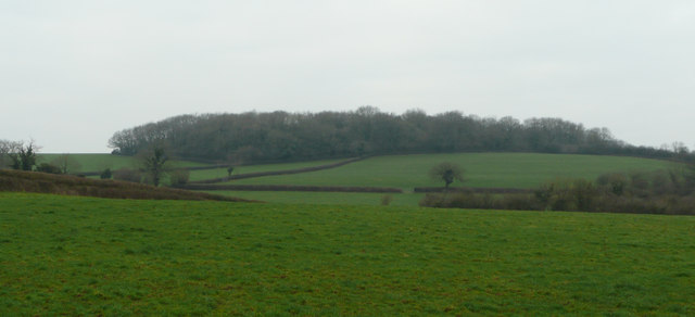 Fields south of Upton Wood