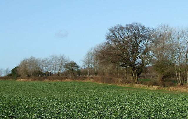 Rapefield near Halfpenny Green, Staffordshire
