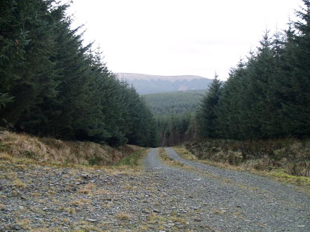 Forest road near Peelbraehope