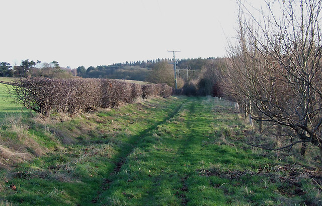 Staffordshire Way near Halfpenny Green
