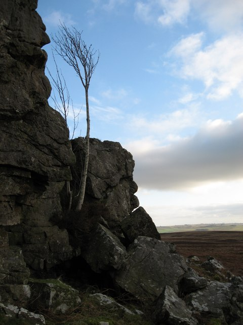 The 'Old Man of Little Callerhues'