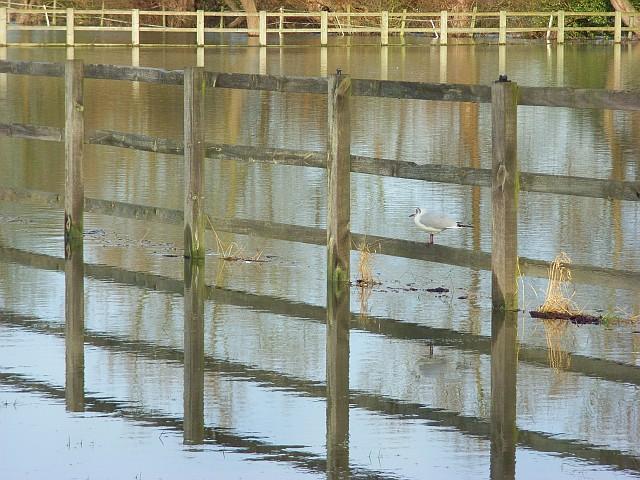 Flooded paddocks, Sonning