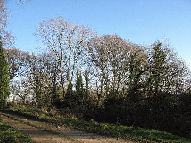 Coed Cefn Mine woodland