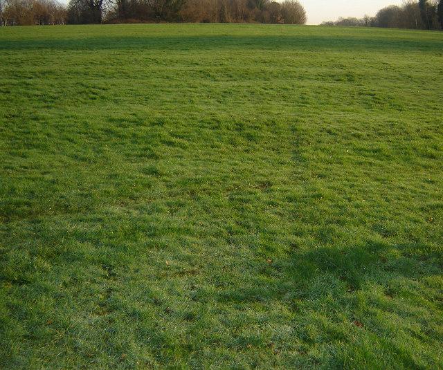 Ridges and Furrows in Farnham Park