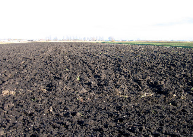 Farmland, Coveney Byall Fen, Cambs