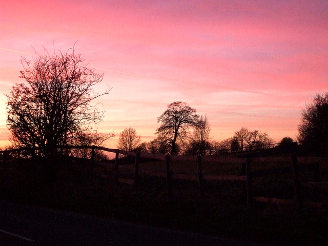 Trees in the dusk near Westland Farm