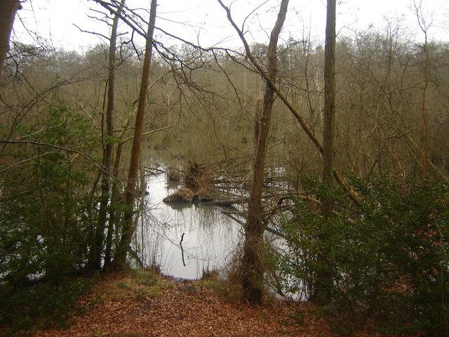 Alder Carr Wetlands