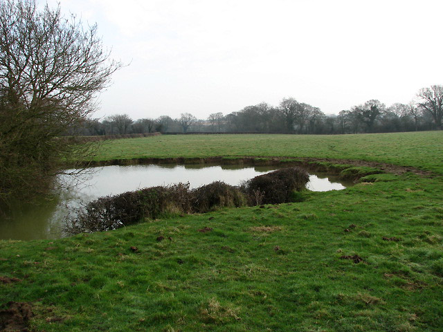 A pond in a pasture