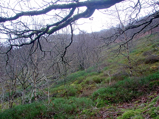 A walk in the Rheidol Valley on a dull, wet January afternoon