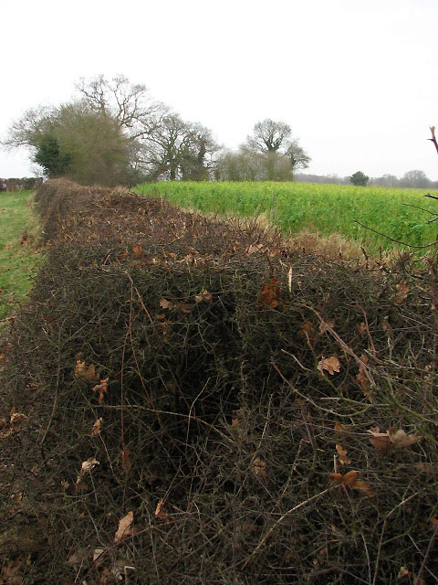 Hedge separating pasture and fields beyond