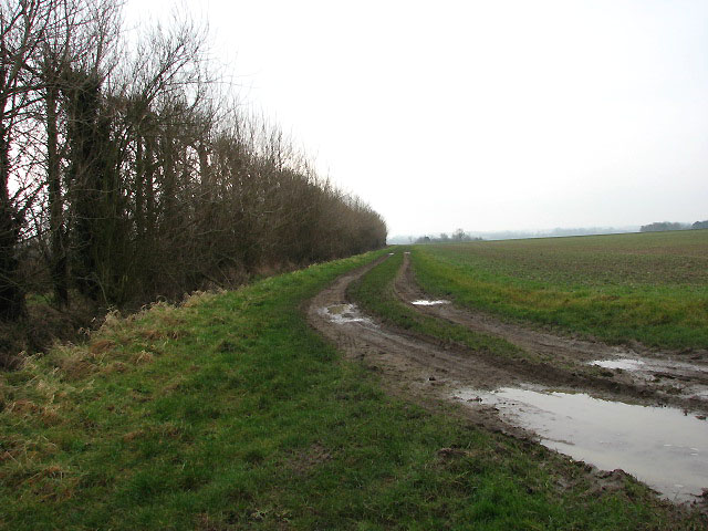 Track past tall hedge